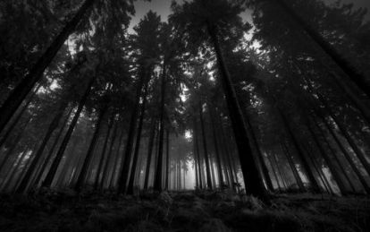 Black-and-white-forest-1024x640